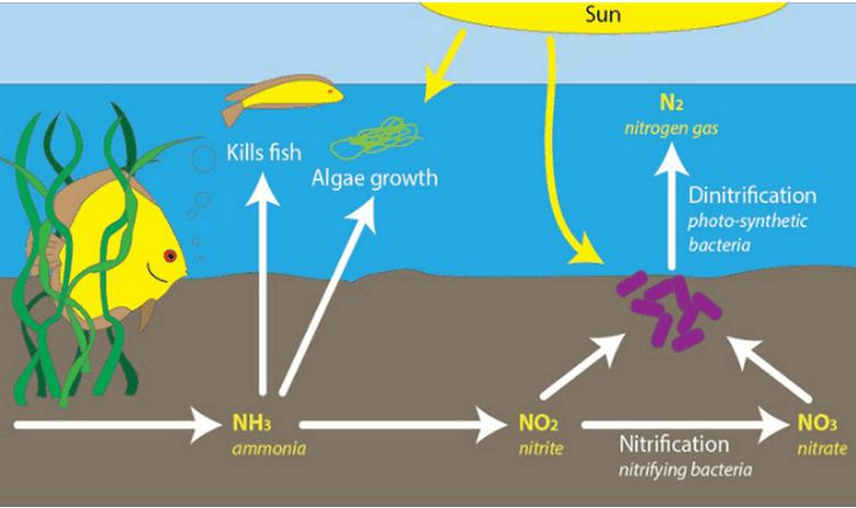xử lí nitơ trong nước thải