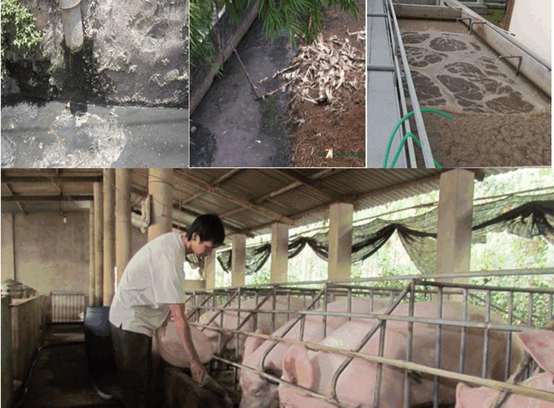 Xử lý nước thải sau hệ thống biogas