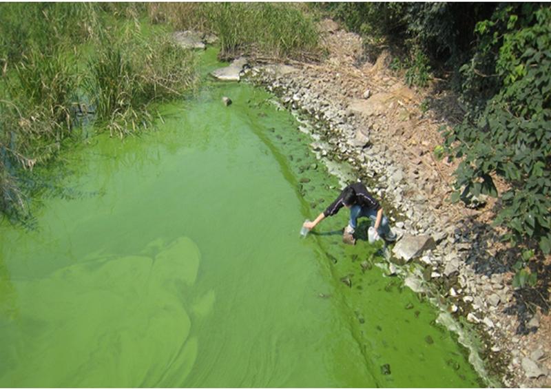 Xử lý tảo nở hoa bằng Microbe- Lift
