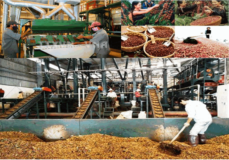 xử lý chất thải của ngành chế biến cà phê