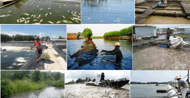 Ô nhiễm môi trường nuôi trồng thủy sản và giải pháp khắc phục