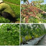 Nông nghiệp bền vững với Microbe Lift