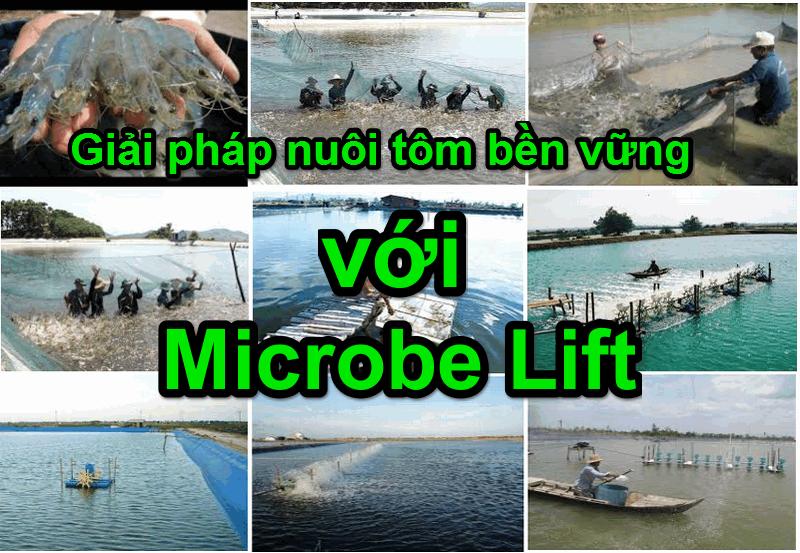 Nuôi tôm bền vững với Microbe Lift