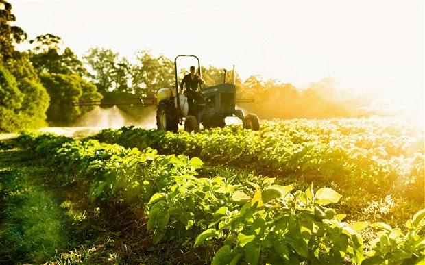 Nền nông nghiệp sạch