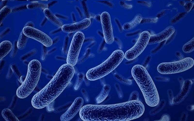 vi khuẩn vi sinh Bacillus