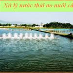 Xử lý nước thải ao nuôi thủy sản
