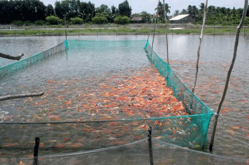 lợi ích chế phẩm vi sinh trong nuôi trông thủy sản