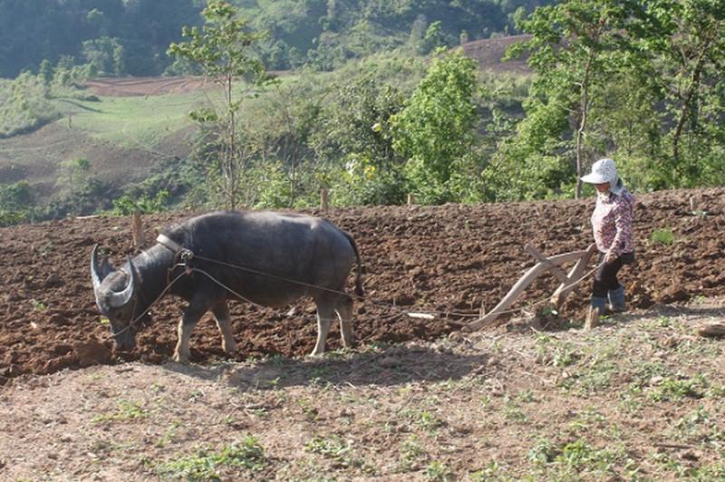 Suy thoái đất nông nghiệp: Nỗi lo của hàng ngàn người nông