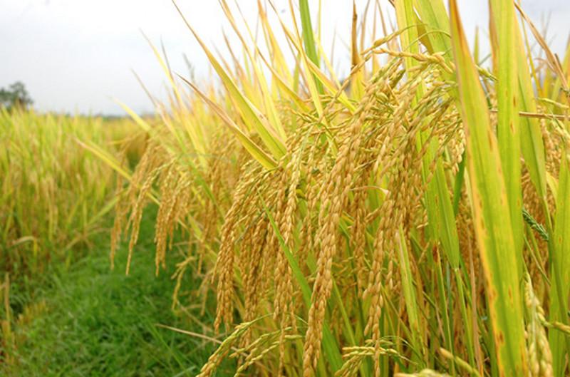 Ứng dụng Quantum Light trong nông nghiệp Việt Nam