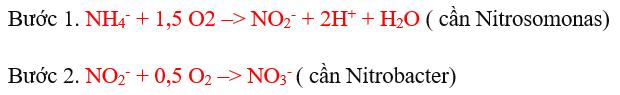 nitrat hóa