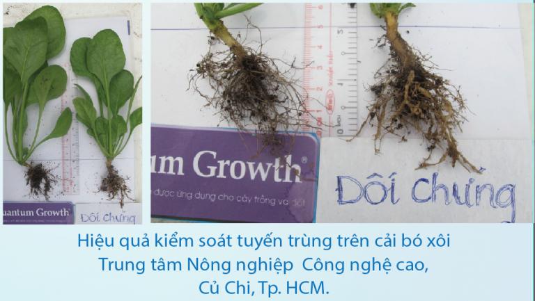 Vi sinh sạch Quantum Growth