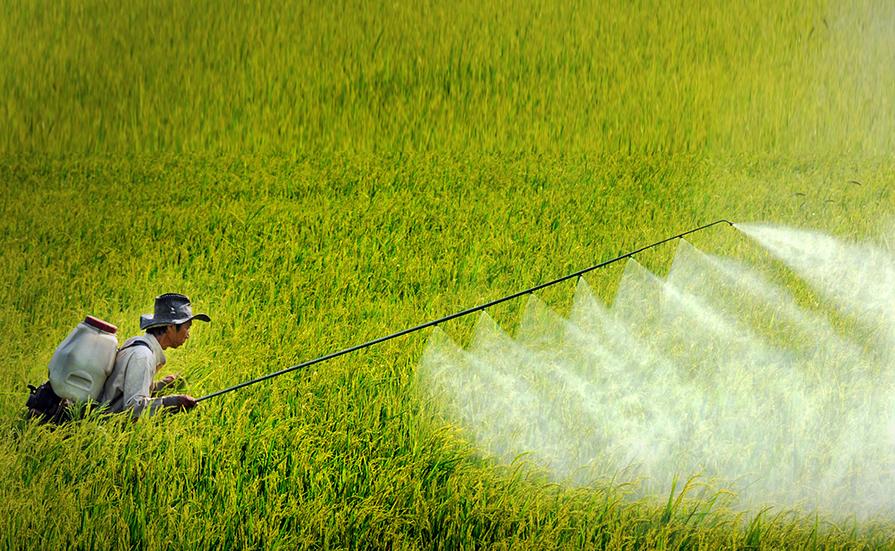 nông dân sử dụng thuốc bảo vệ thực vật