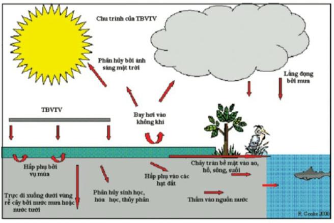 Chu trình phát tán hóa chất BVTV trong hệ sinh thái nông nghiệp