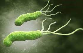 vi khuẩn Pseudomonas giữ vai trò quan trọng