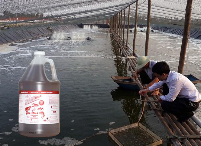 Microbe-Lift AQUA C giup tang nang suat nuoi trong thuy san