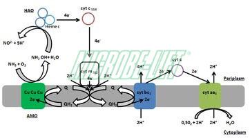 xu ly nuoc thai| Microbe-Lift