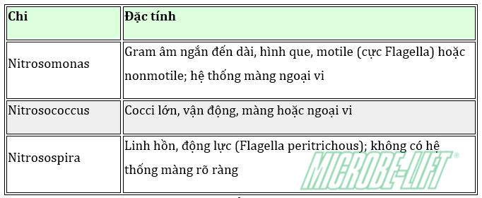 xu ly nuoc thai va qua trinh chuyen hoa ni to cua vi sinh vat dathop 03