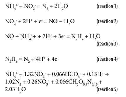 vi khuan anammox trien vong giai phap xu ly nito hieu qua p2 0 1 1