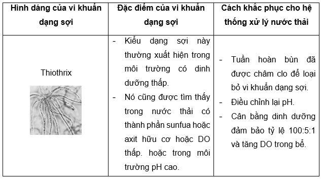 vi khuan dang soi co tot cho he thong xu ly nuoc thai 04