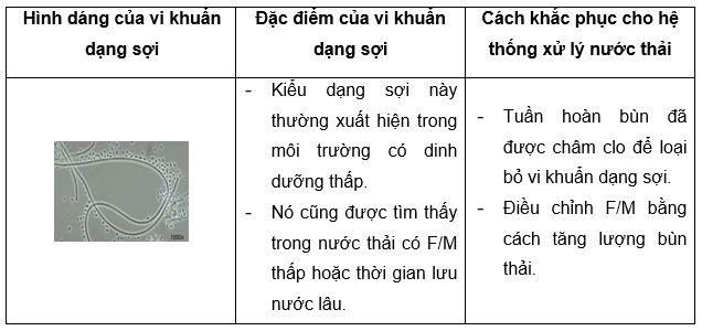 vi khuan dang soi co tot cho he thong xu ly nuoc thai 05