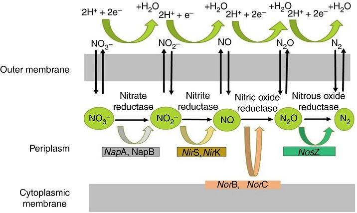 Qua trinh khu Nitrat