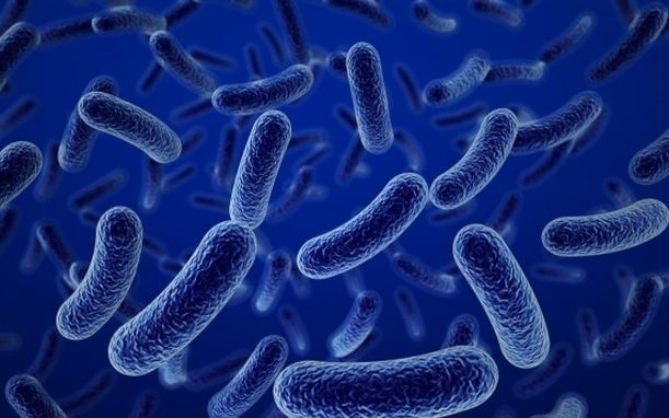 Vi khuan bacillus