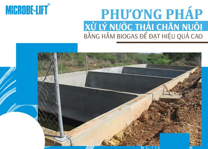 xử lý nước thải chăn nuôi lợn bằng hầm Biogas để đạt hiệu quả cao