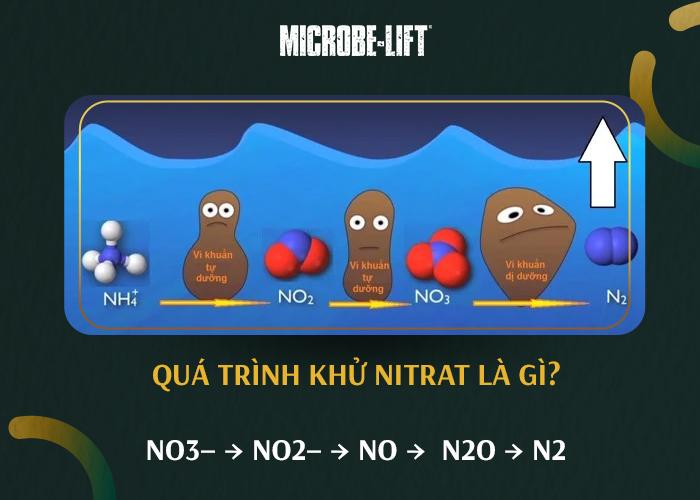 Quá trình khử nitrat hóa là gì_ - 02