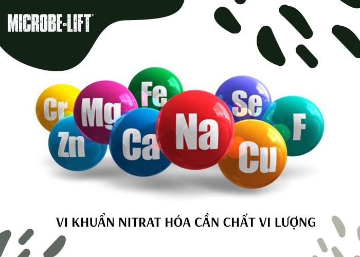 Vi khuẩn Nitrat hóa cần chất vi lượng