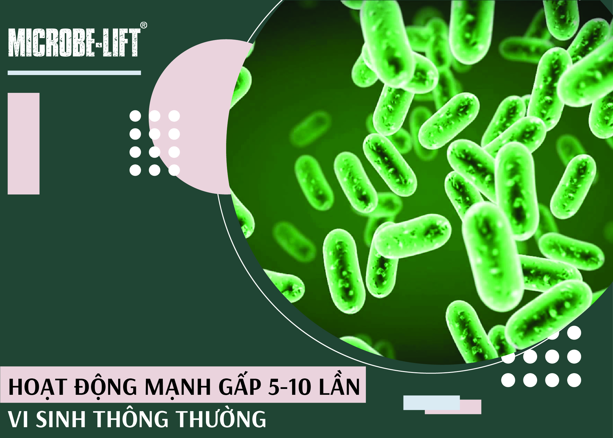 Vi sinh vật trong IND hoạt động mạnh gấp 5-10 lần vi sinh thường