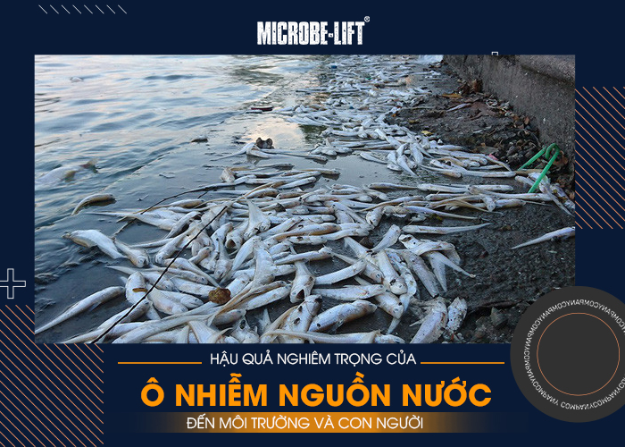 Hậu quả nghiêm trọng của ô nhiễm nguồn nước