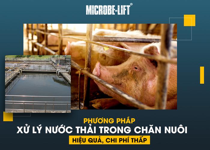 Phuong phap xu ly nuoc thai trong chan nuoi hieu qua chi phi thap 01