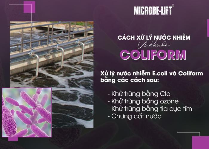 Cách xử lý nước nhiễm vi khuẩn Coliform