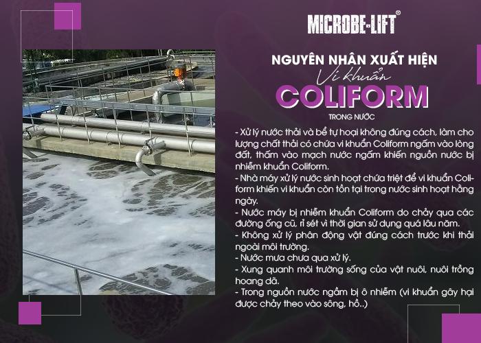 Nguyên nhân xuất hiện vi khuẩn Coliform trong nước