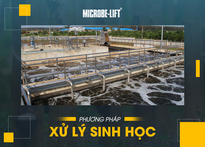 phương pháp xử lý nước thải cao su bằng phương pháp sinh học