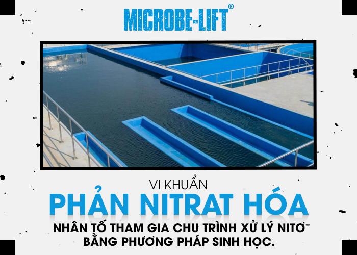 Vi khuẩn phản Nitrat hóa - nhân tố tham gia chu trình xử lý Nitơ