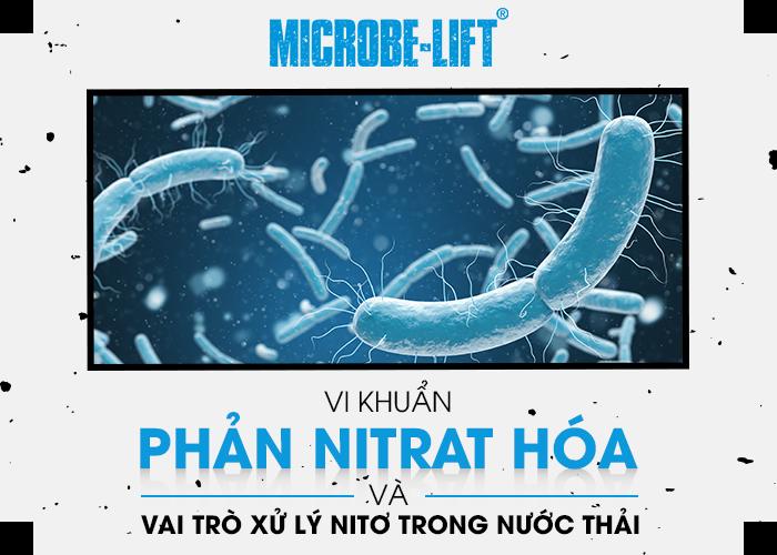 Vi khuan phan Nitrat hoa va vai tro xu ly Nito trong nuoc thai 01