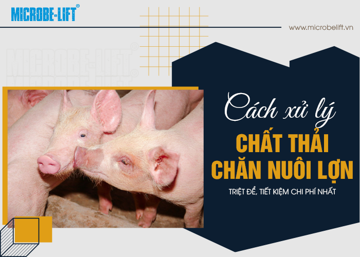 Cach xu ly nuoc thai chan nuoi lon 01