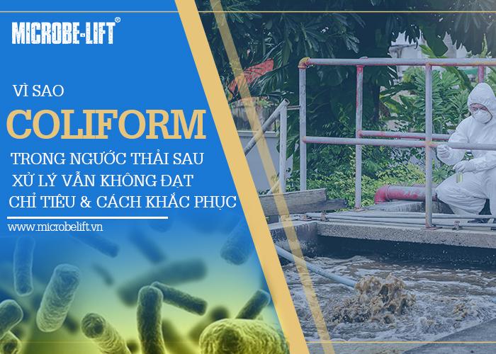 2/ Vì sao Coliform trong nước thải sau xử lý vẫn không đạt chỉ tiêu và cách khắc phục