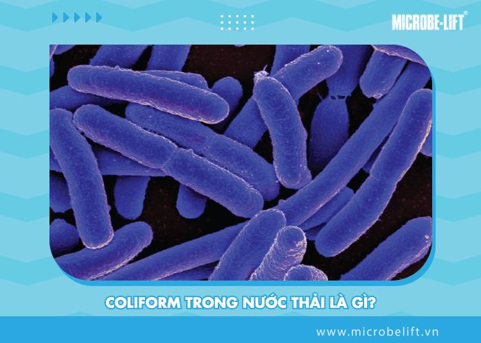 Khac phuc tac hai cua coliform trong nuoc thai 2