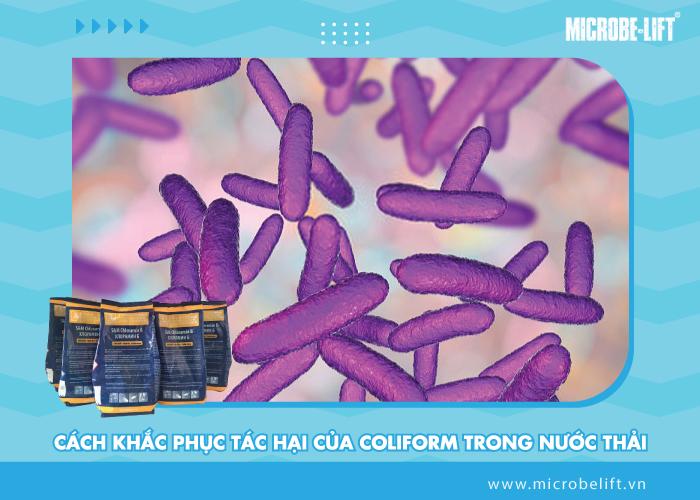 Cách khắc phục tác hại của coliform trong nước thải