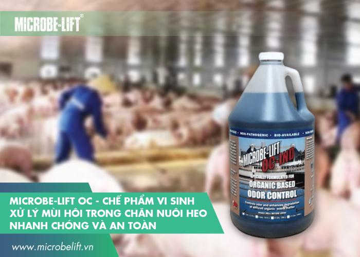 Microbe-Lift OC - Chế phẩm vi sinh xử lý mùi hôi trong chăn nuôi heo nhanh chóng và an toàn