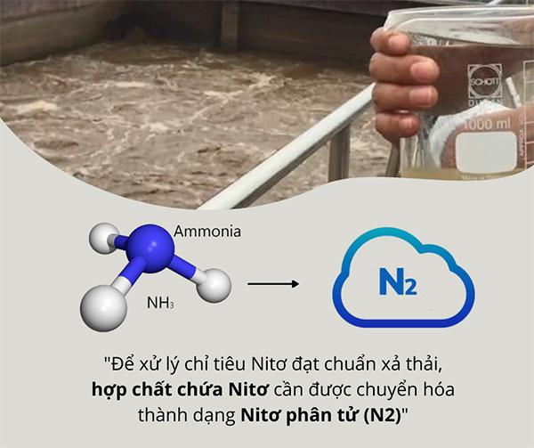 2 quá trình xử lý Nitơ của Vi sinh