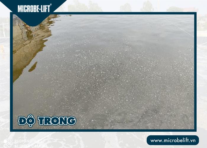 Độ trong ảnh hưởng đến chất lượng nước nuôi tôm