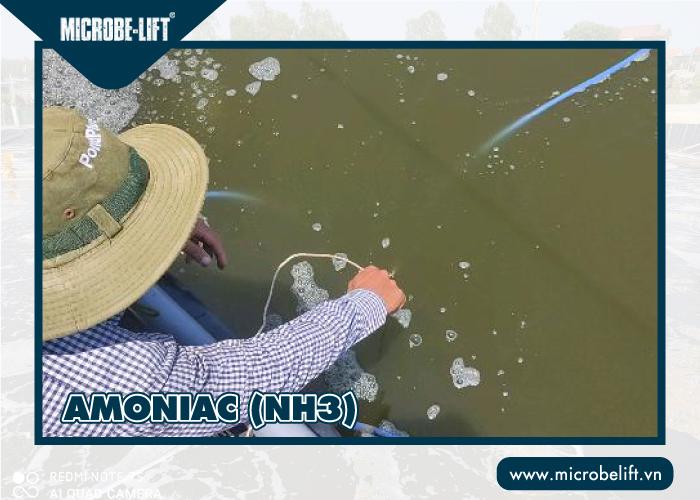 Amoniac ảnh hưởng đến chất lượng nước nuôi tôm
