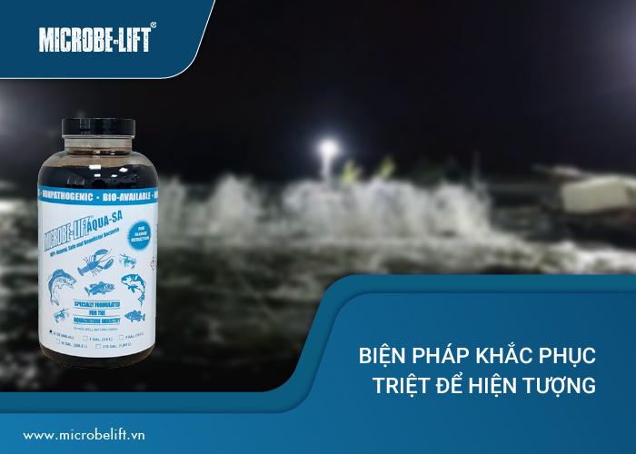 khắc phục nước ao tôm phát sáng