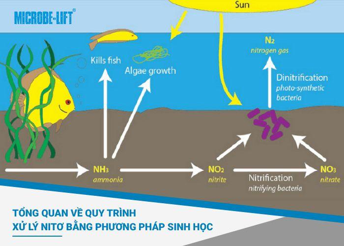 xử lý nitơ bằng phương pháp sinh học
